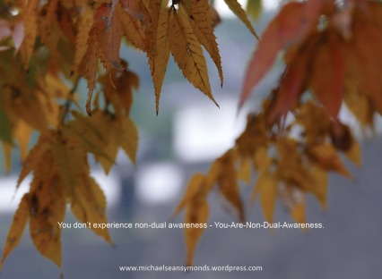 You Don't Experience Non-Dual Awareness. michael sean symonds