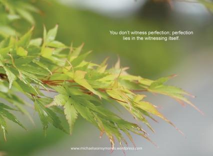 You Don't Witness Perfection. michael sean symonds